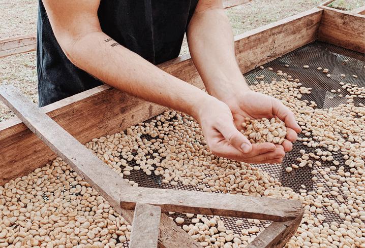Raisbed bei Petunia specialty coffee. Hochwertiger fair trade Rohkaffee aus Brasilien